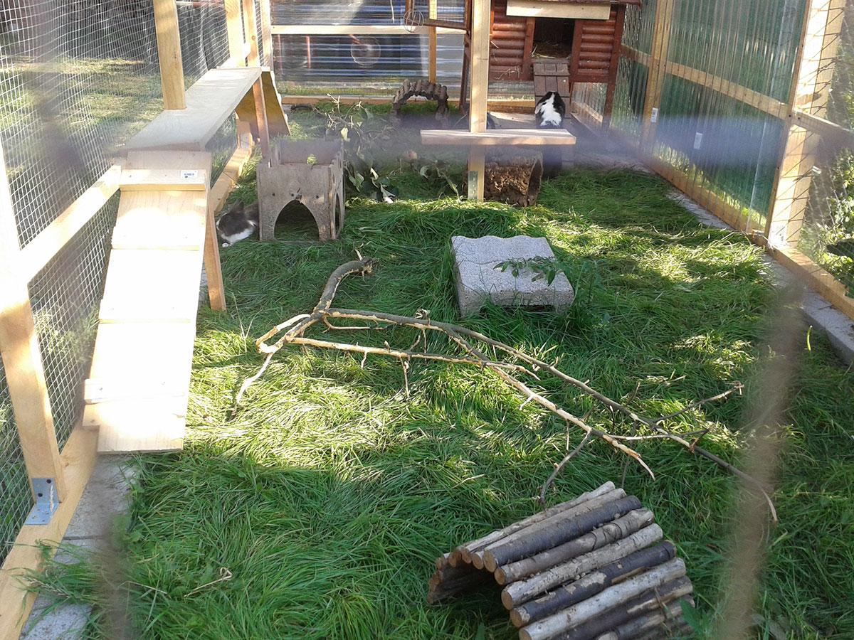 kaninchen meerschweinchen und hamster beim tierarzt. Black Bedroom Furniture Sets. Home Design Ideas
