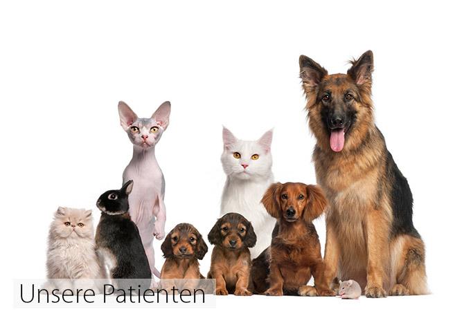 Unsere Patienten