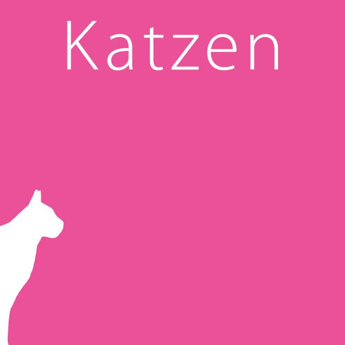 /unsere-patienten/katzen/